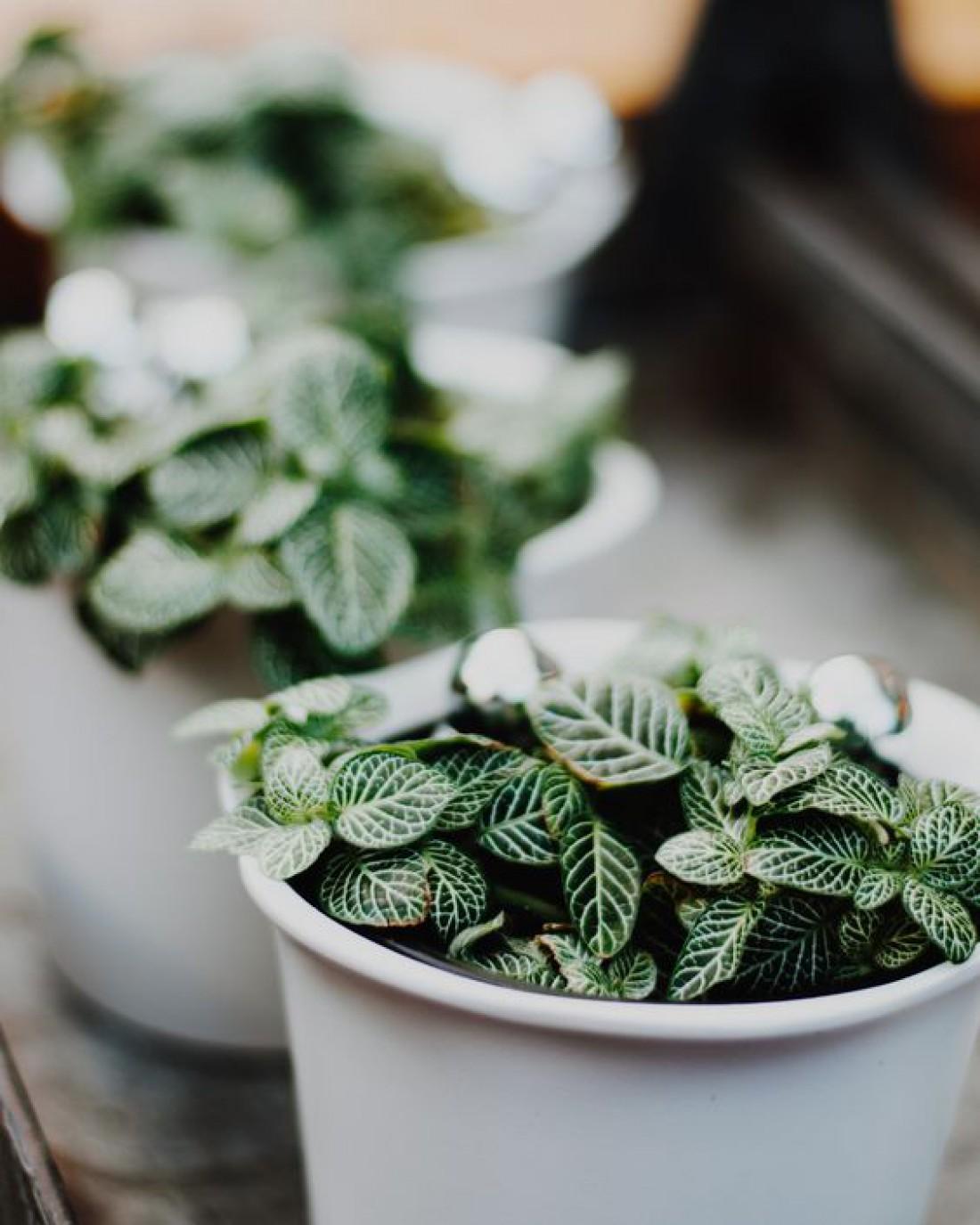 Лунный календарь для комнатных растений на ноябрь 2019