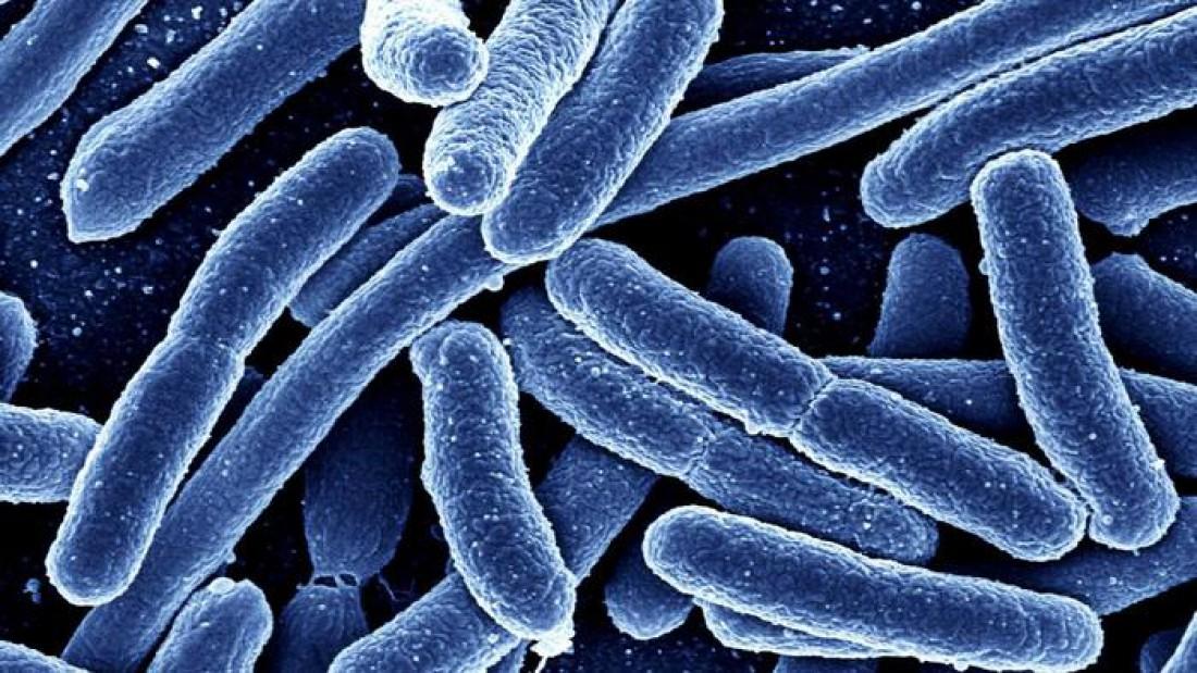 Ученые определили самые опасные для человека бактерии