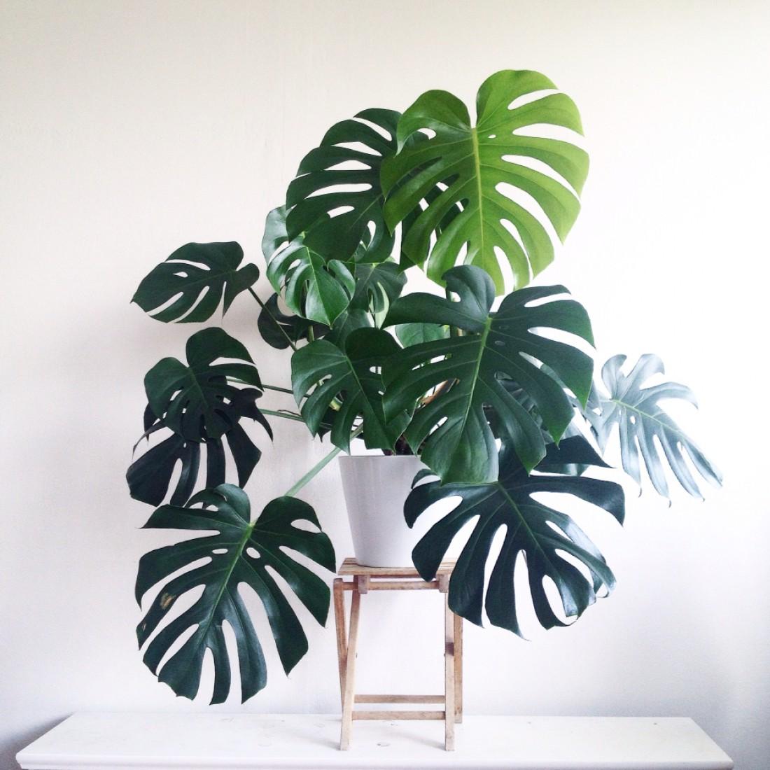Внимательно следи за поведением растения
