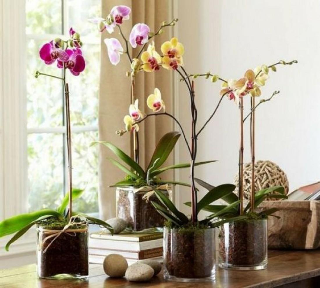 Лунный календарь для комнатных растений на декабрь 2019