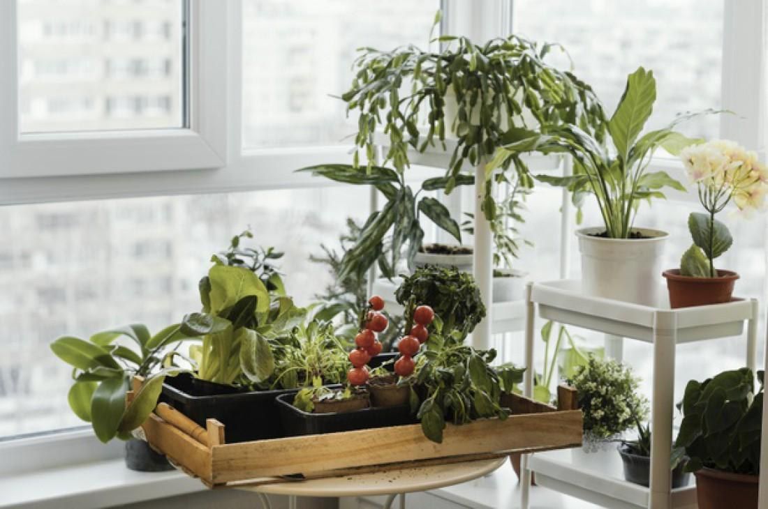 Лунный календарь для комнатных растений на март 2021