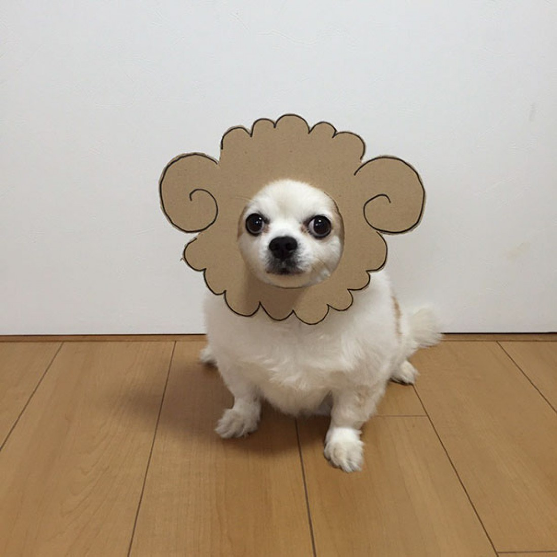 Собачка-барашек