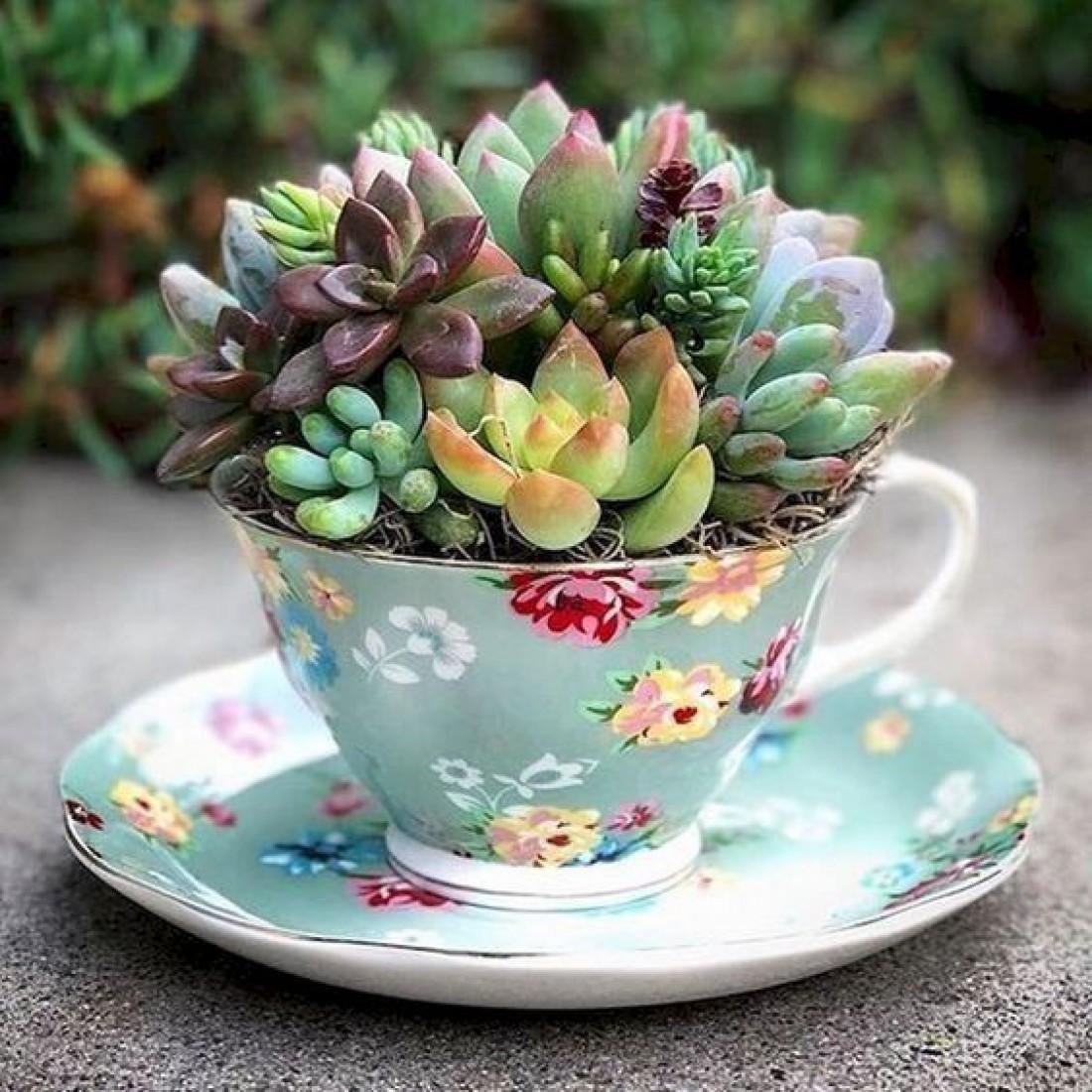 Подарок на 8 марта для бабушки: Растение в оригинальном вазоне