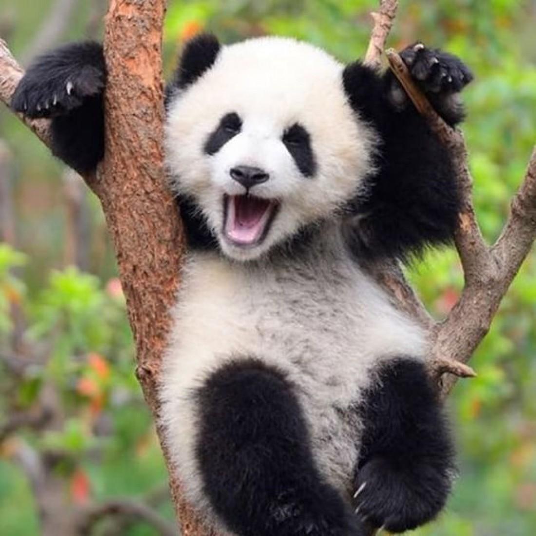ТОП-7 самых милых животных мира