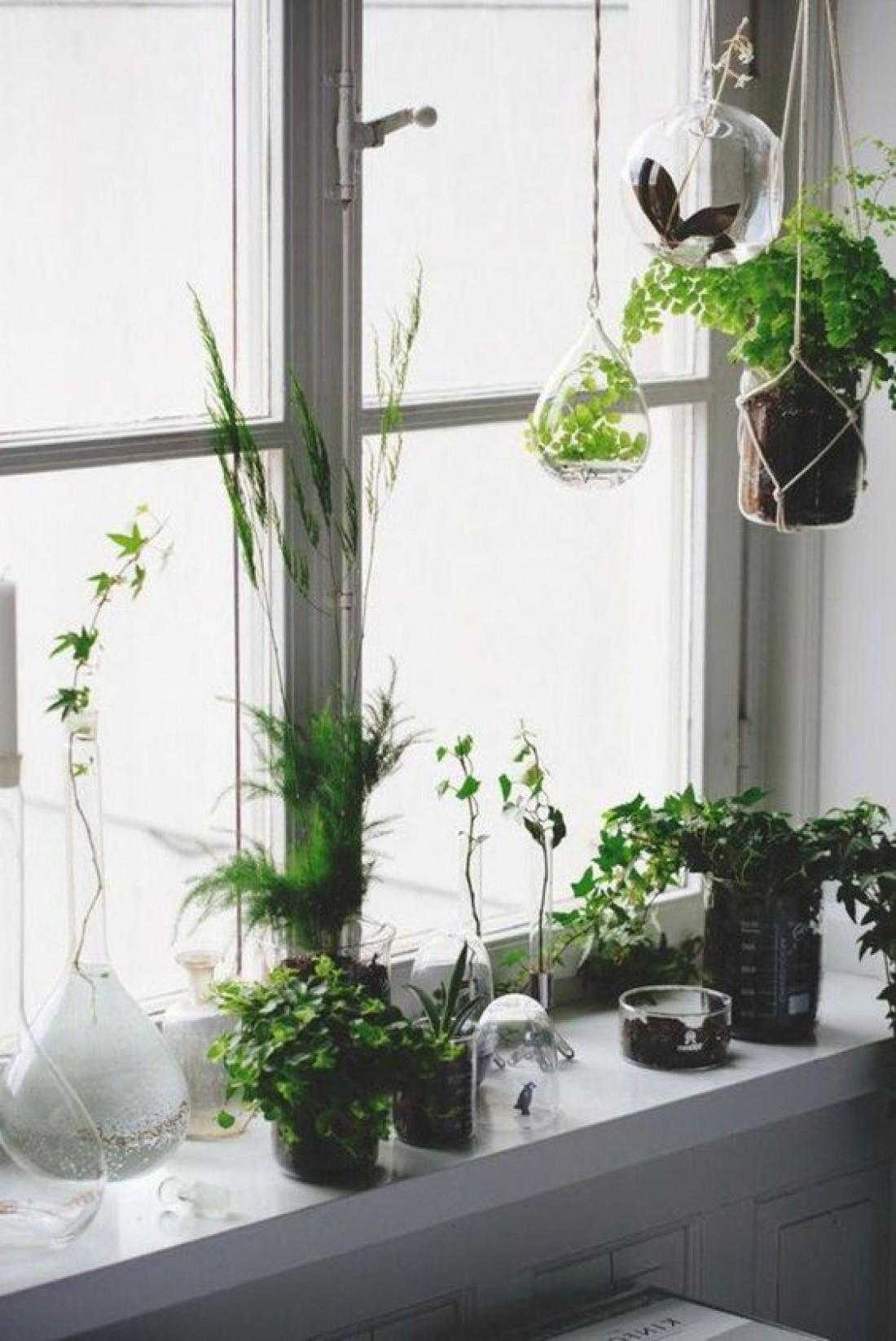 Зеленое чудо: Как вырастить зелень на подоконнике в домашних условиях