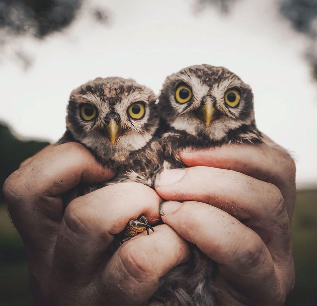 Конста Пункка фотографирует животных