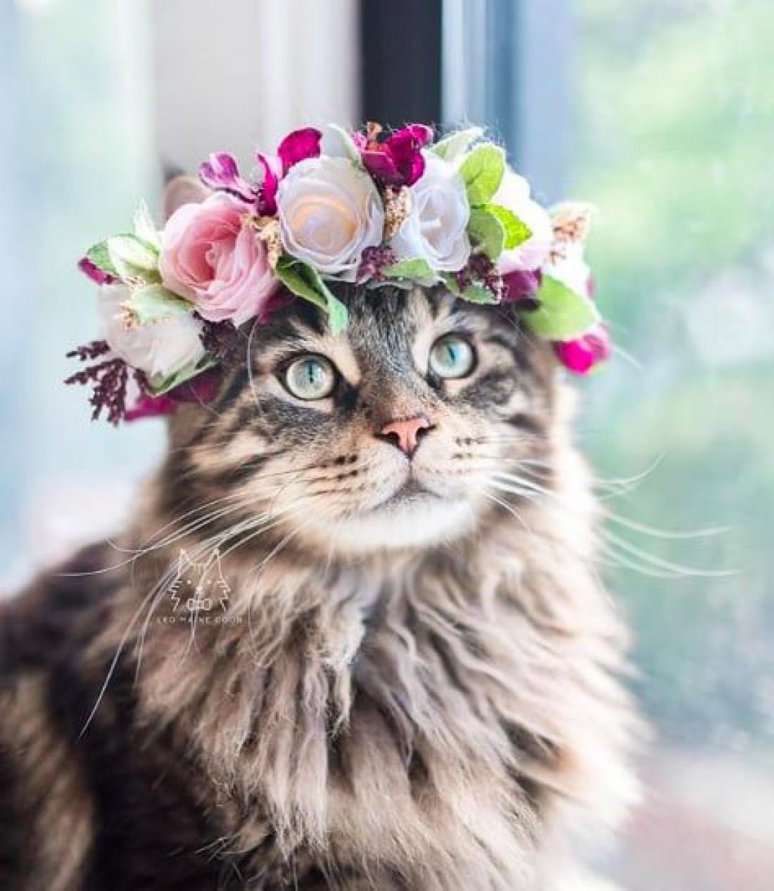 Оставьте котика в покое! Что нужно знать о токсоплазмозе?
