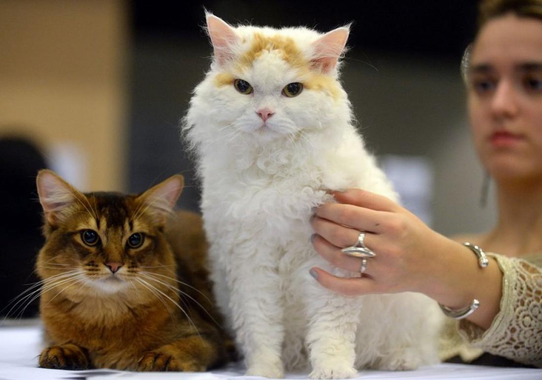 Всем котиков