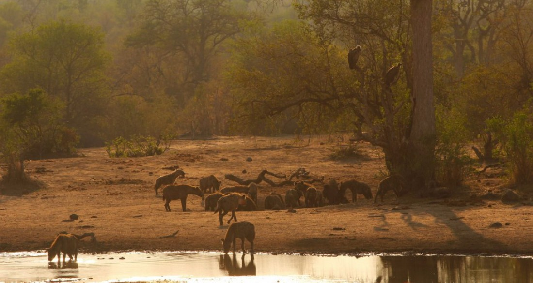 Национальный парк Крюгера, Африка