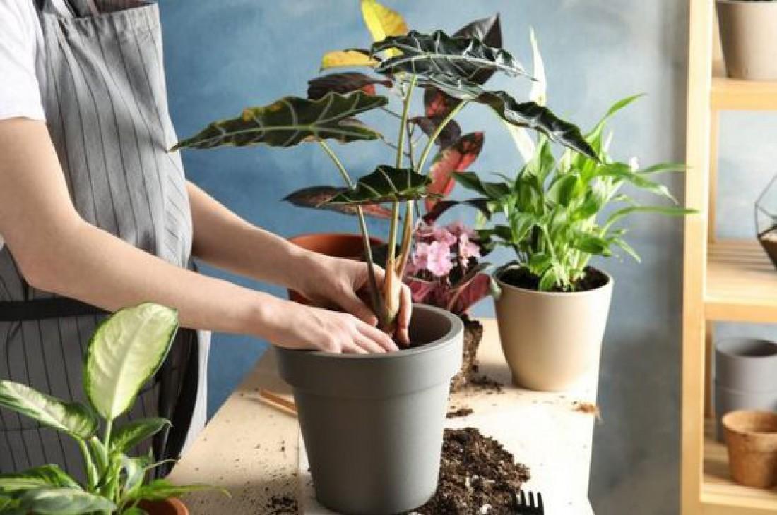Лунный календарь для комнатных растений на январь 2020