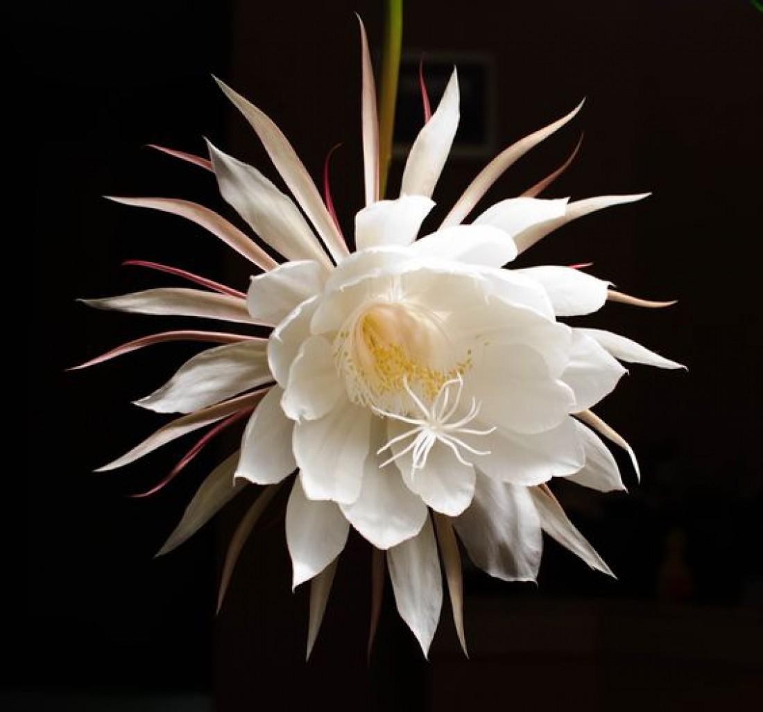 ТОП-15 самых красивых цветов в мире