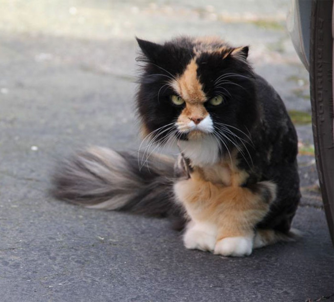 Самые злые в мире коты