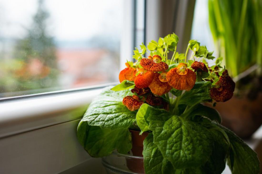 Лунный календарь для комнатных растений на январь 2021