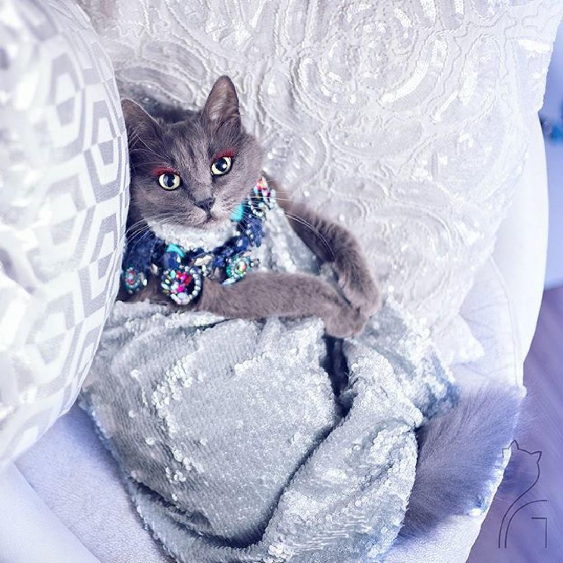 Кошка Пицуш