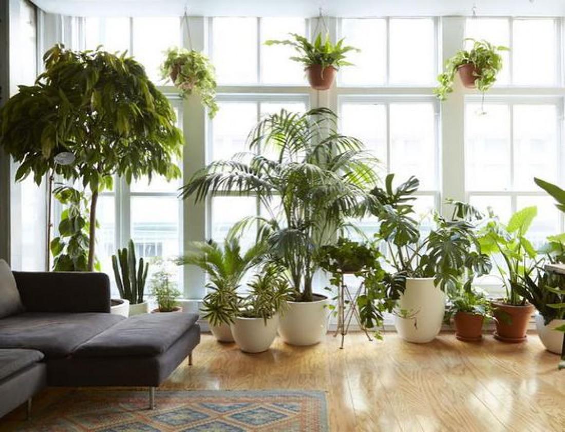 Лунный календарь для комнатных растений на июнь 2020