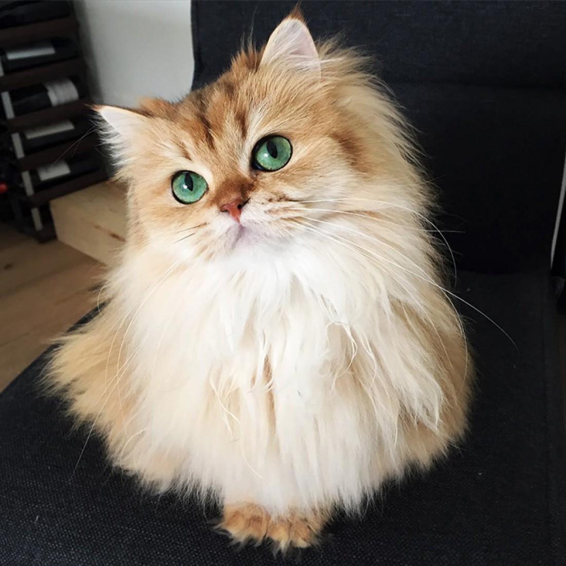 Самы красивые котики