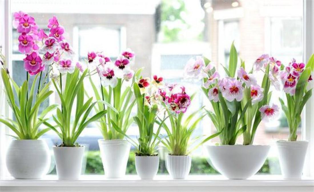 Лунный календарь для комнатных растений на февраль 2020