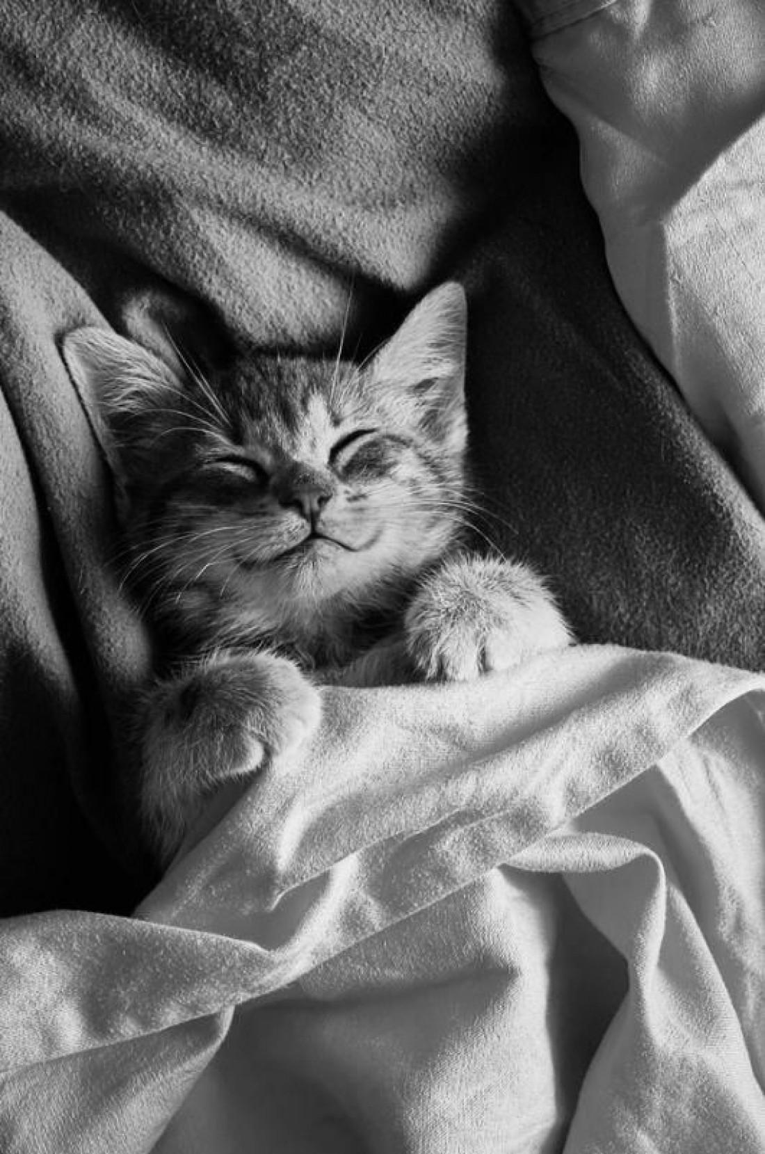 Котики прославились благодаря своей нежности