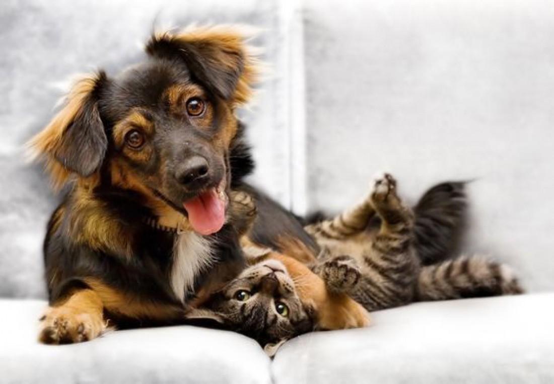 Битва разумов: Ученые выяснили, кто умнее - коты или собаки