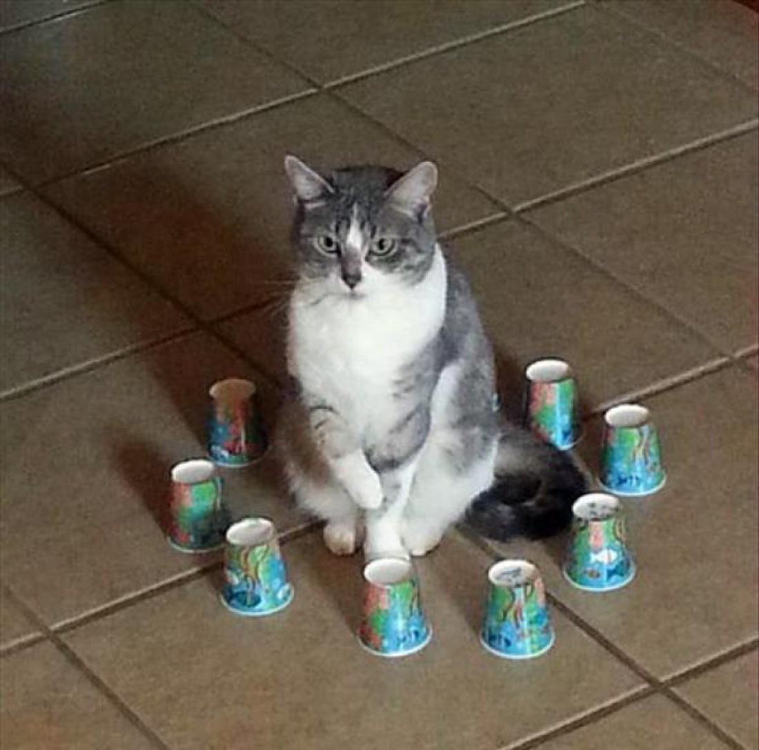 Ловушки для кошек