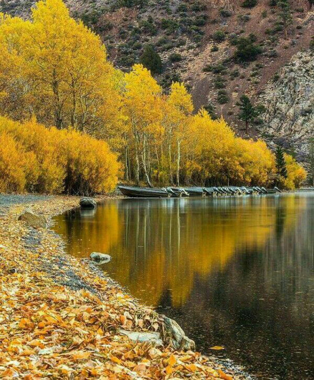 Ольманские болота