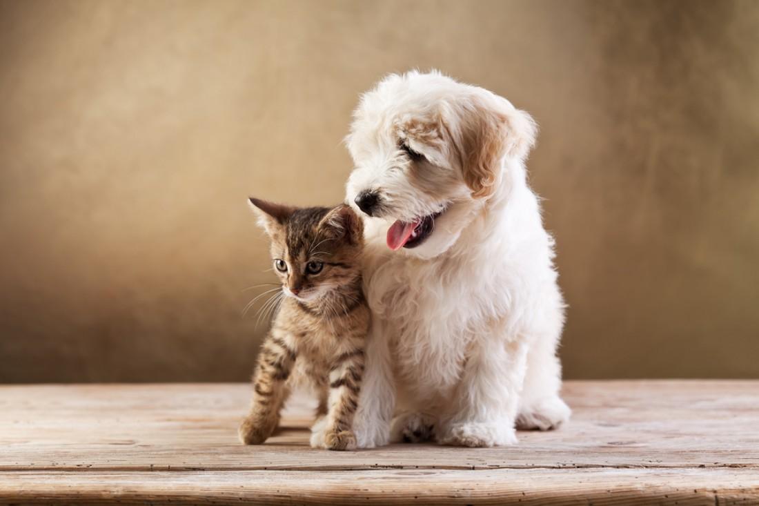 Котенок сбежал из бокса к своему другу