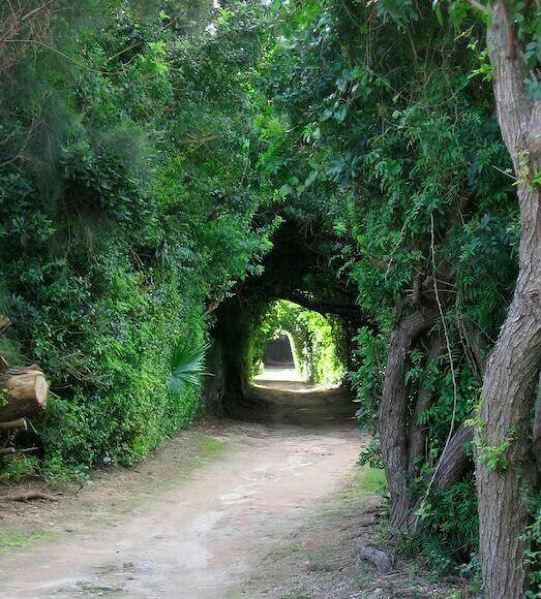 Парк Виктории
