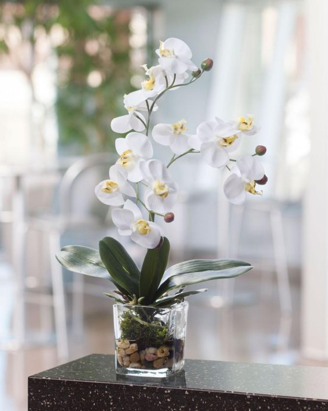 Как нужно поливать орхидею: лайфхаки и полезные советы