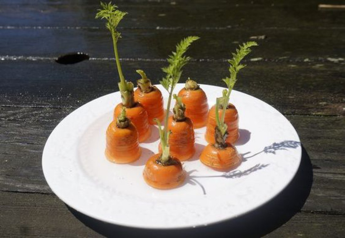 Огород на подоконнике: Как вырастить морковь?