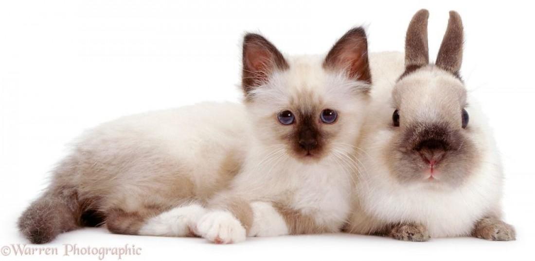Коты и кролики могут быть одинаковыми