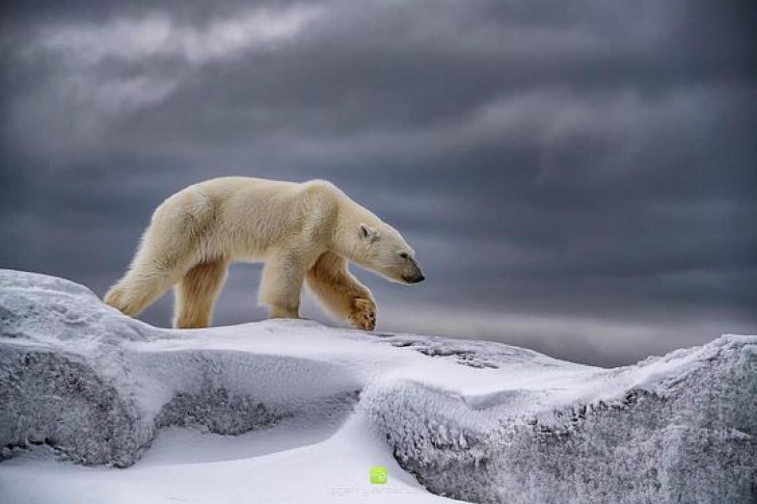 В царстве Ледовитого океана: Красивейшие места Шпицбергена