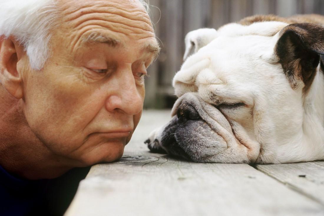 Почему стоит завести собаку прямо сейчас?