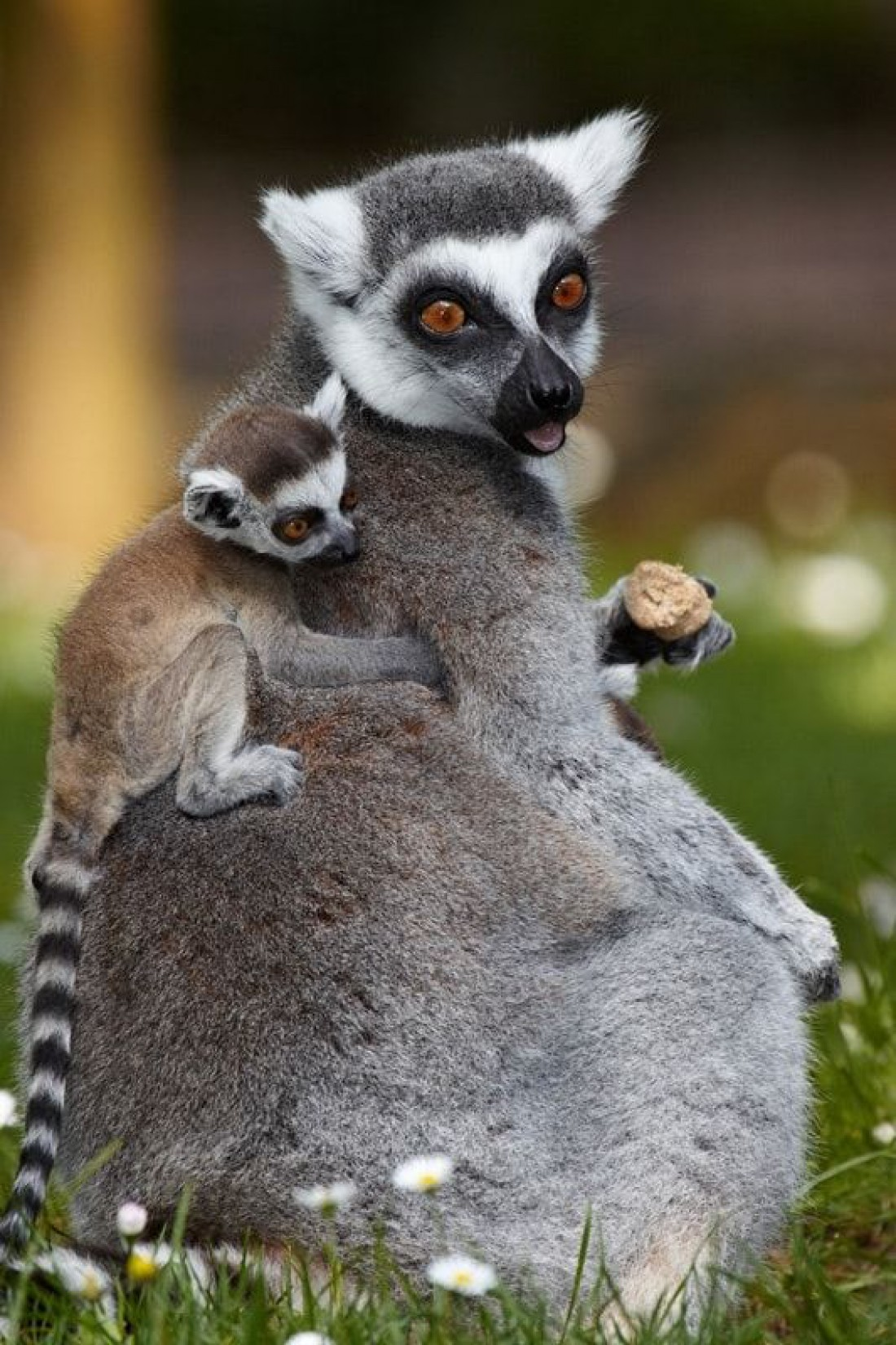Мадагаскар: ТОП-5 туристических мест самого большого острова Африки