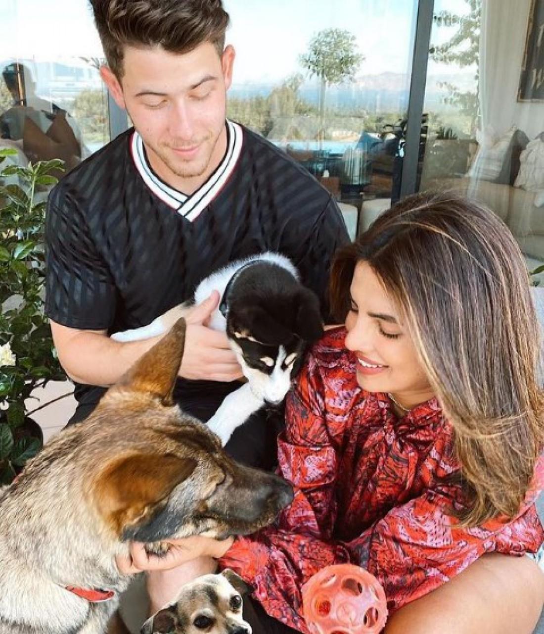 Приянка Чопра и Ник Джонас и собаки Панда, Диана и Джино