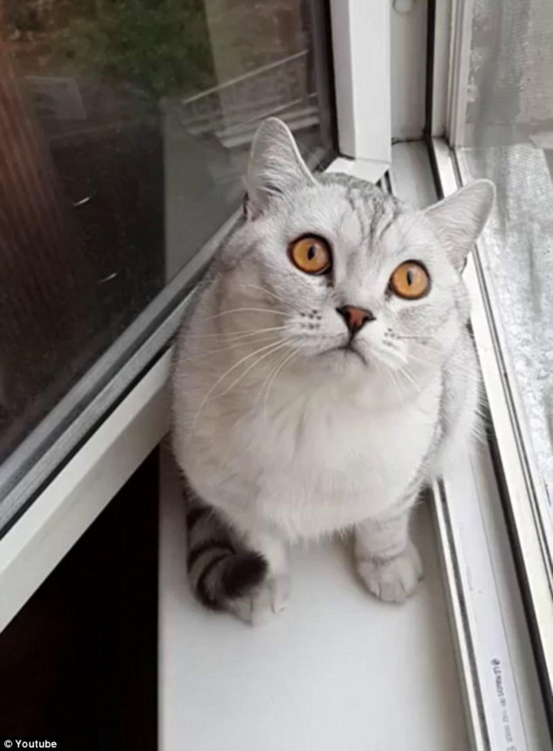 Сосредоточенный кот повеселил пользователей Сети