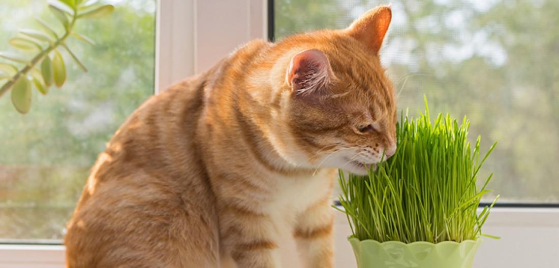Как защитить комнатные растения от домашних животных