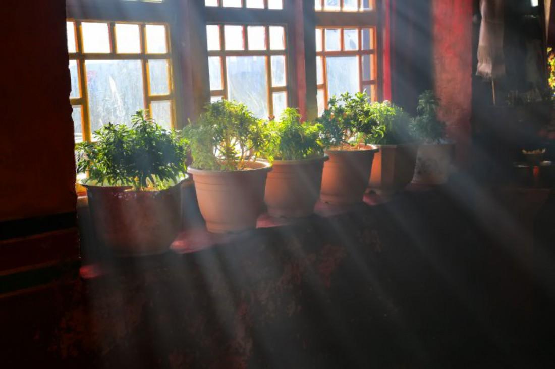 Лунный календарь для комнатных растений на декабрь 2020