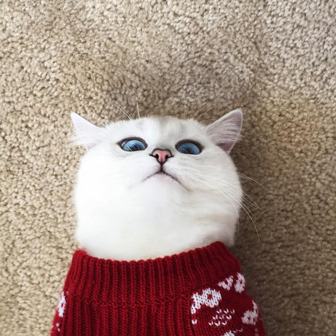 Коби стал героем Instagram благодаря своим глазам