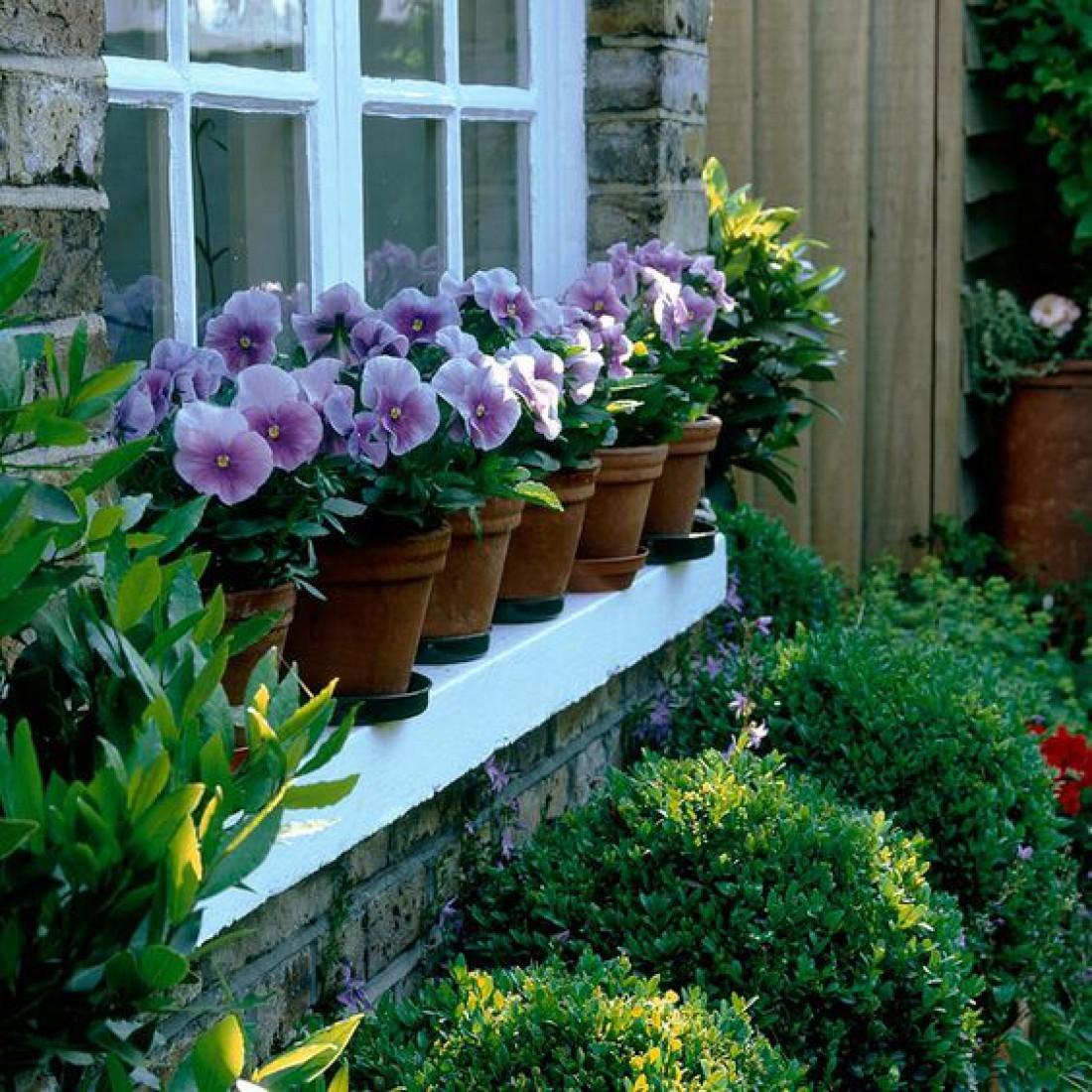 можно вырастить фиалки из семян в домашних условиях