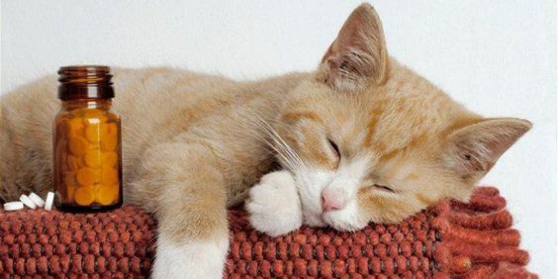 Домашняя аптечка и кот