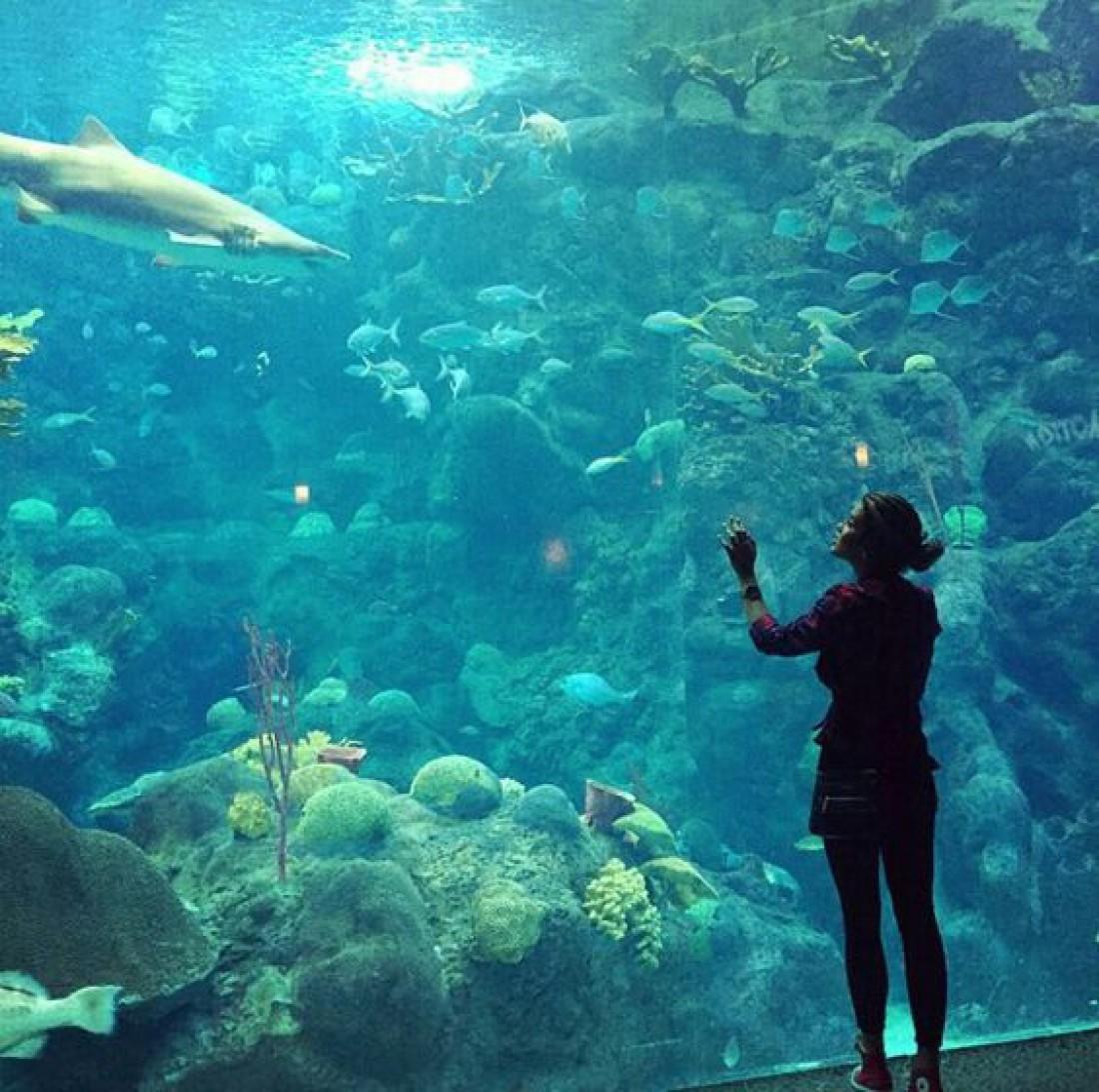 Океанографический музей-институт Монако