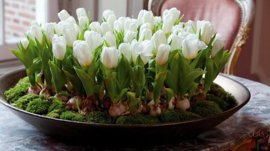 Лунный календарь для комнатных растений на март 2020