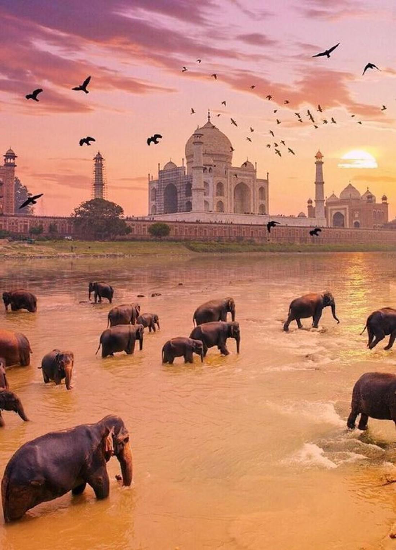 Тадж-Махал - величественный памятник любви и скорби