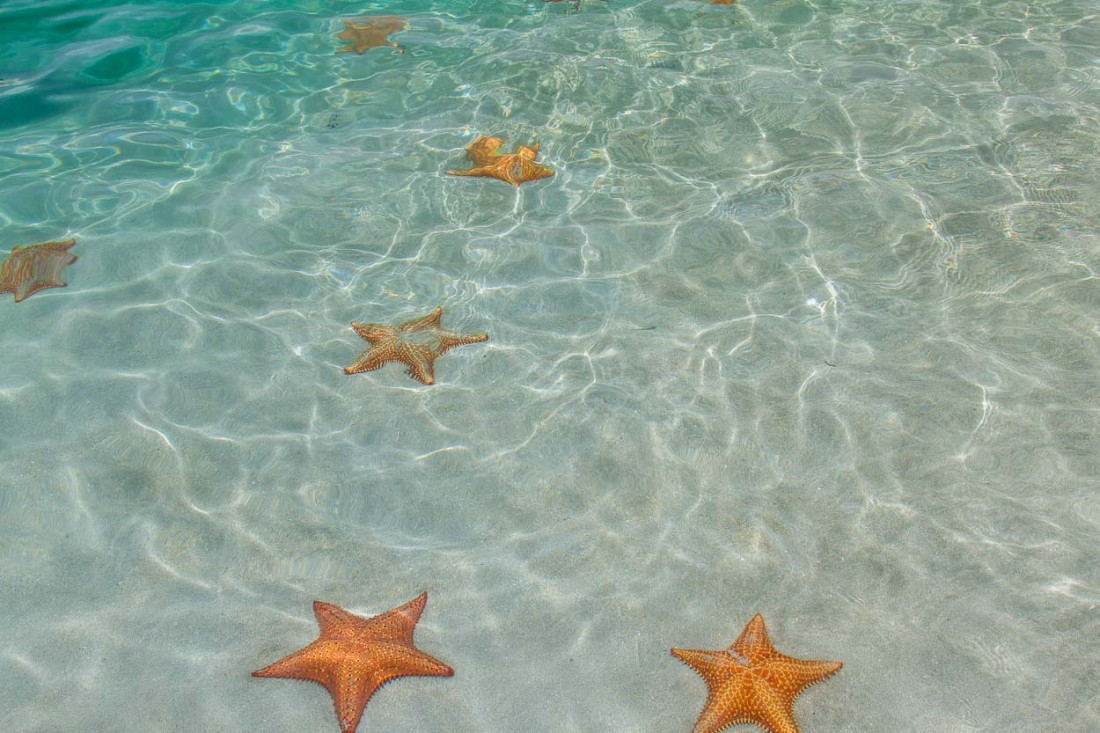 Starfish Beach, Панама