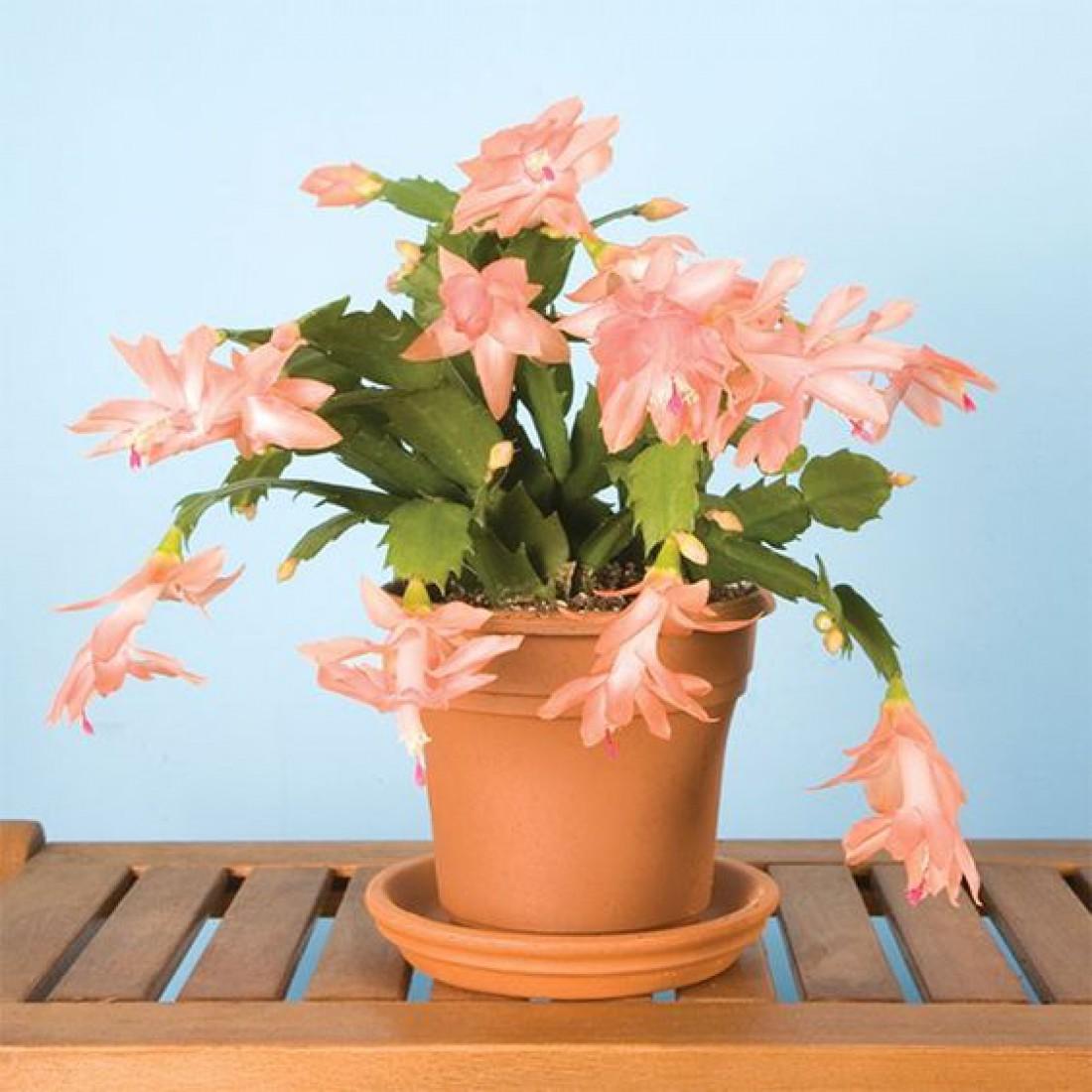 Лунный календарь для комнатных растений на май 2020