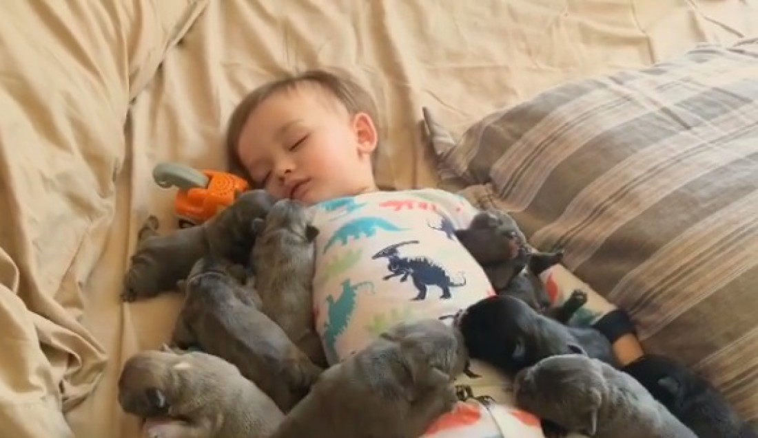 Спящий со щенками малыш покорил Сеть