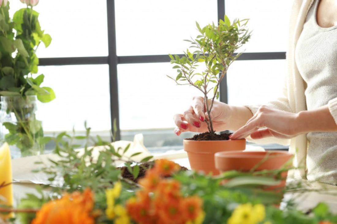 Лунный календарь для комнатных растений на февраль 2021