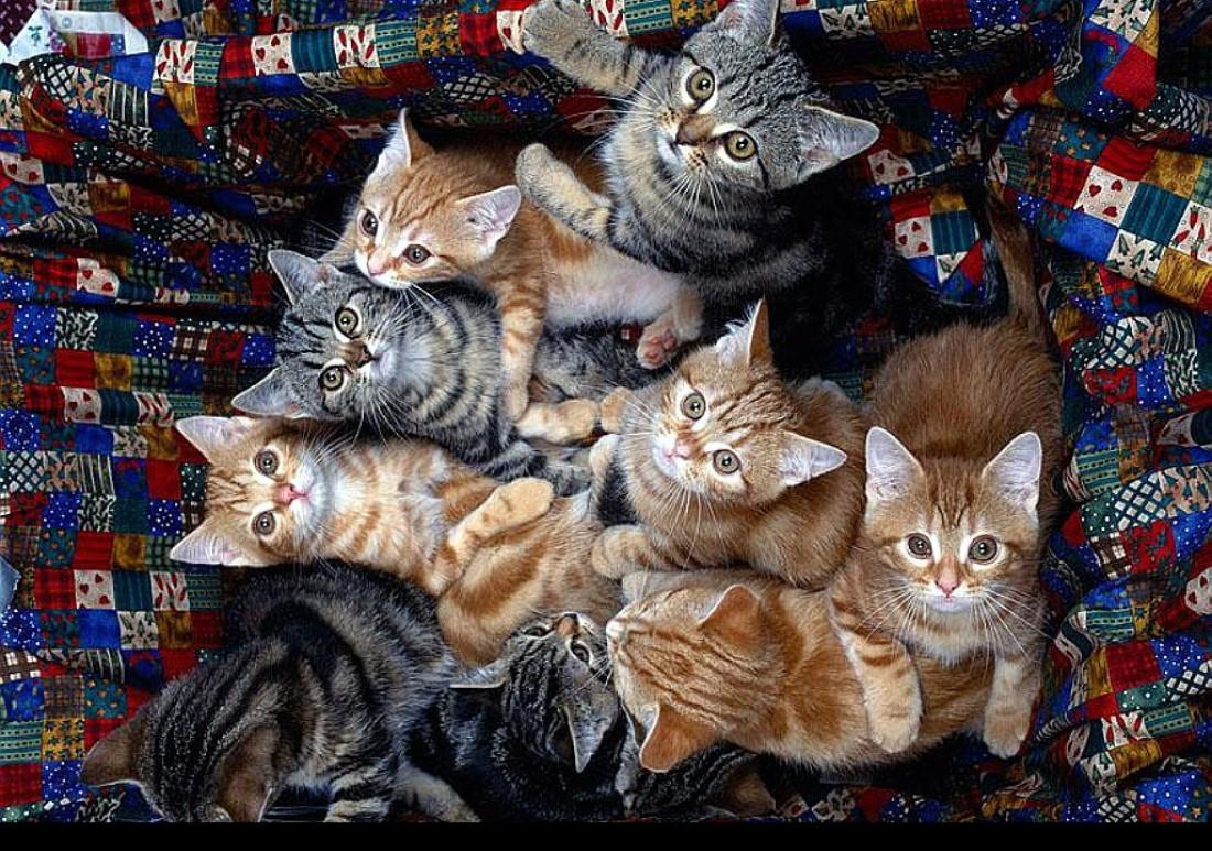 Американка уступила свой дом тысяче котов
