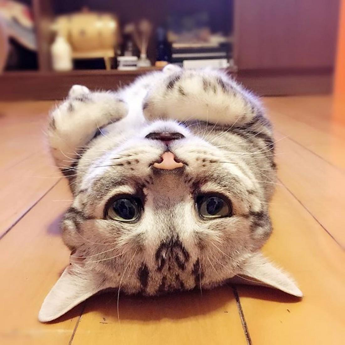 Кот Луху
