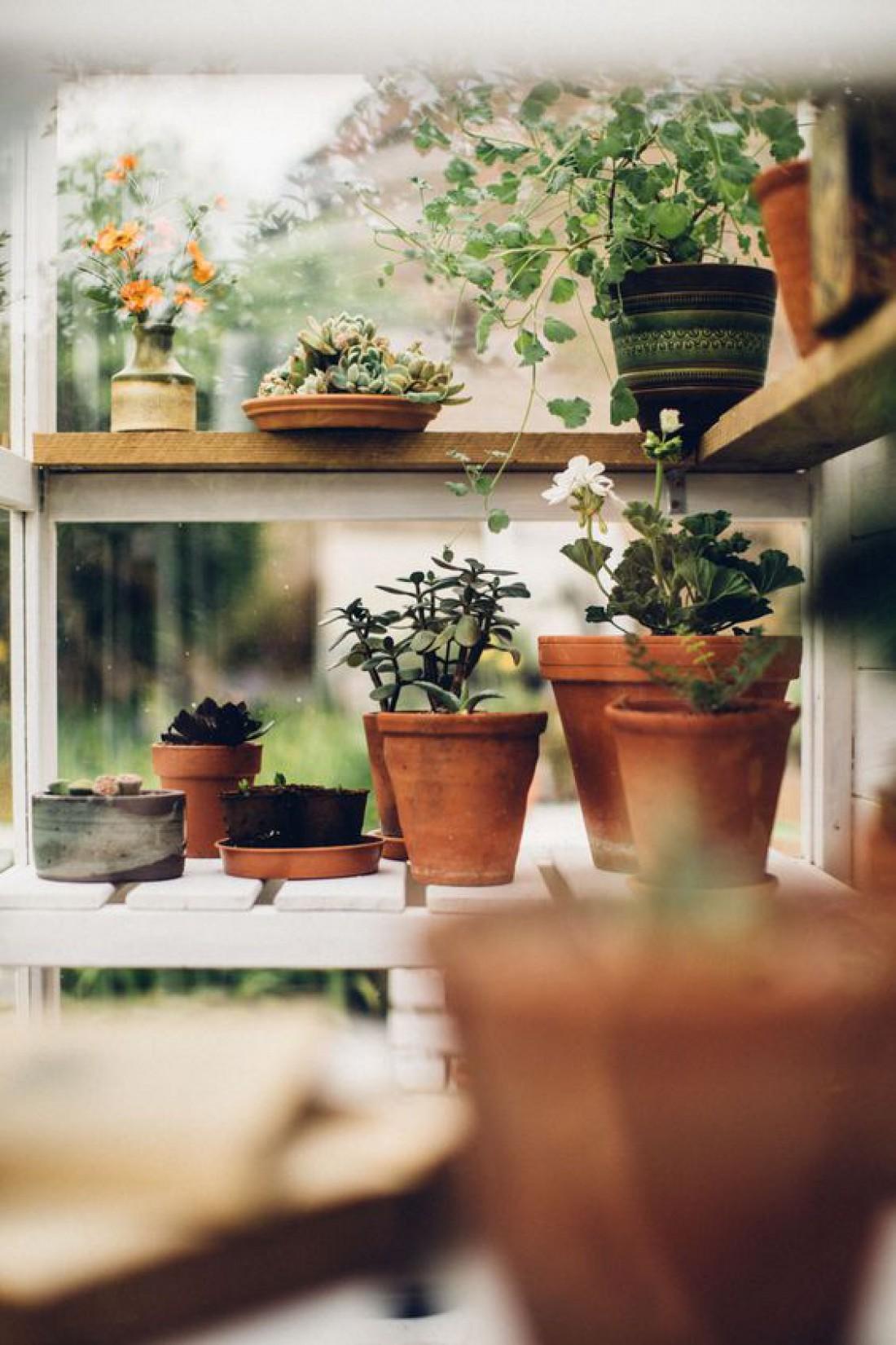 Лунный календарь для комнатных растений на октябрь 2019